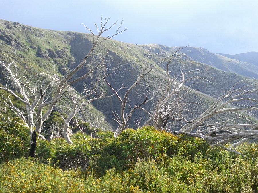 Ascending Mt Bogong